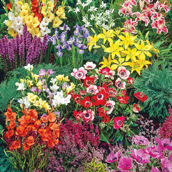 Buy Pre Planned Gardens at Michigan Bulb