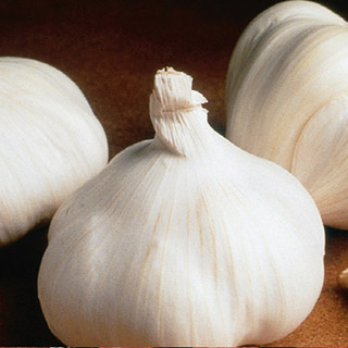 California Giant Garlic